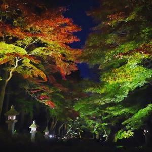 夜の胡宮神社【お気楽写真館218】