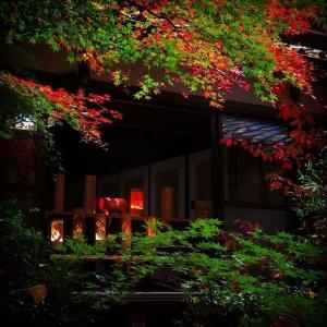 モミジと竹灯籠【お気楽写真館223】