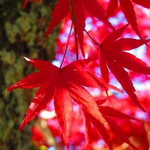 【11月の4枚】Red Leaves Collection