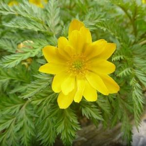 【春の写展】 Spring Yellow Flowers