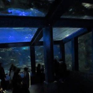 鳥羽水 超水族館3(2019年)