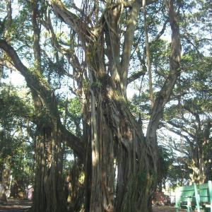 マダガスカル第二の都市 Tamatavo ①