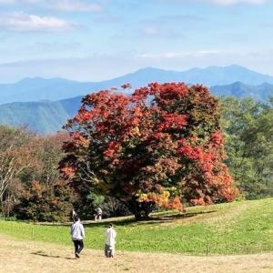 紅葉見頃の安曇野