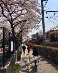 桜と都電の撮影ポイント、荒川二丁目駅