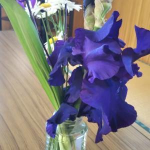 秋田県大館市  にゃごにゃごにゃーご  【全力♥️憩い】温泉と紫