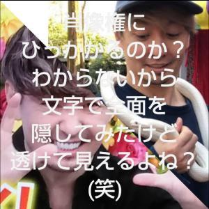 秋田県大館市  にゃごにゃごにゃーご  【全力♥️待ち受け】流行りにのってみた(笑)