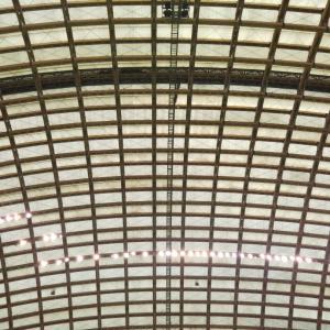 秋田県大館市  にゃごにゃごにゃーご  【全力♥️ワクチン】一回目終了