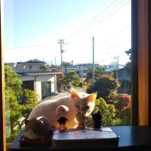秋田県大館市  にゃごにゃごにゃーご  【進撃の巨猫】