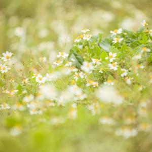 春です!和ハーブの季節です!