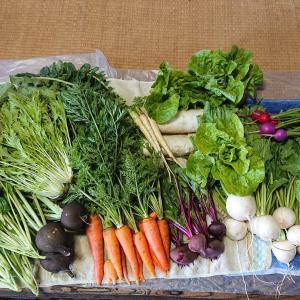 無農薬野菜をつくるための苦労と工夫