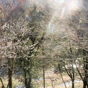 里山に、住む土地(1,347㎡)を探している方へ 足助地区/萩野