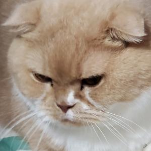猫のパワー