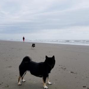 海岸ではしゃぐ♪