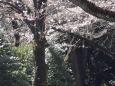 いろいろ(924)日本行き延期