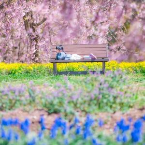 4/19.20 お花畑撮影会