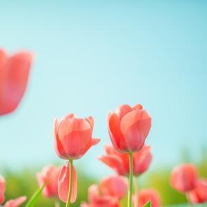 桜はまだ一輪も咲いていませんでした