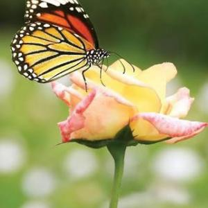 Memories from Butterfly Oracle Cards