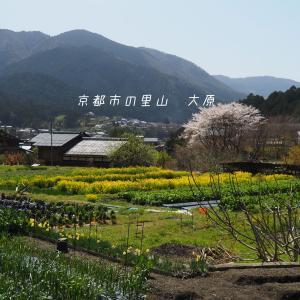 春の滋賀京都旅③洛北ぶらり大原山荘に宿泊
