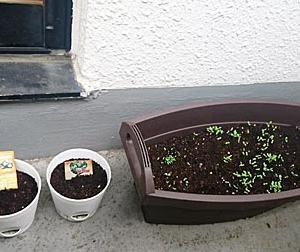 植物観察記2