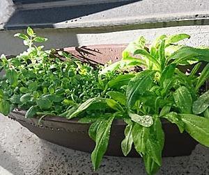 植物観察記6