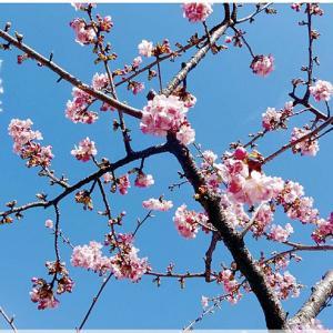 梅の花の歌(万葉集より)