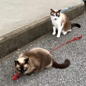 ネコのお散歩