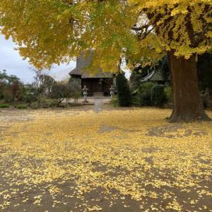 秋真っ只中❣️