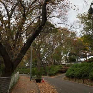 川崎市の夢見ヶ崎動物公園を歩く。