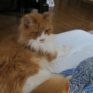 あまりの暑さに昨晩は寝床を移動。猫と毎日かくれんぼ。
