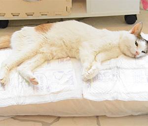我が愛猫の体調が悪化し寝たきりに!先週死相が出て病院に行き一時回復の兆しが?