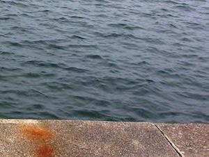 漁港でトホホホホホ!:東海道中ガサ釣り記⑩