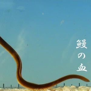 兼題『鰻』 俳句ポスト365 結果や如何に!~ニホンウナギの成長を添えて~