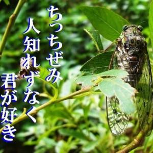 『蝉』 俳句ポスト365 結果:人二つ!