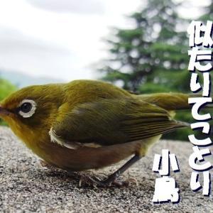 俳句生活『よ句もわる句も』 兼題【小鳥】『人』2つ