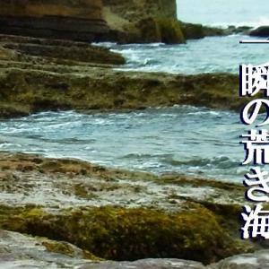 『寒海苔』 俳句ポスト365 :新年は『人』から♬