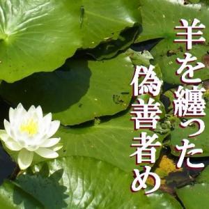 『睡蓮』初落選記念号! 俳句ポスト365:7月の俳句結果②