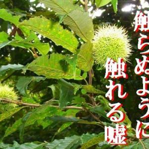 『ギュッと!四国』俳句道場  兼題【栗】:9月の俳句結果①