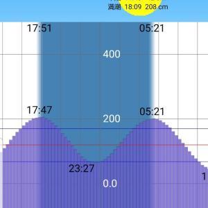 【京浜運河2019】釣りあるある「柳の下のどじょう」