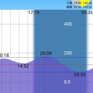 【荒川シーバス2019】潮は悪いが久々の夕マズメ