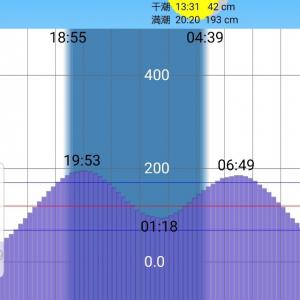 【荒川シーバス2019】今期初雷魚