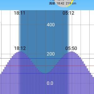 【荒川シーバス2019】ホーム河川では自己記録