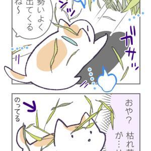 枯れ草アート