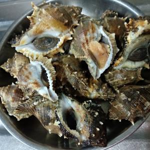 香港の食材:貝。名前は分からないけど一山HK$20だったので買ってみたら美味しかった貝。