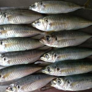香港の食材:アジっぽい何か。煮たり焼いたりフライにしたり。こちらもお安くてとても重宝なお魚。