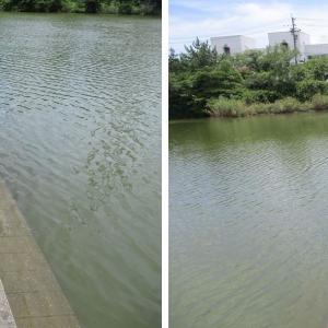 週末の昼下がり、短時間だけ行ってきましたが… in 蝮池