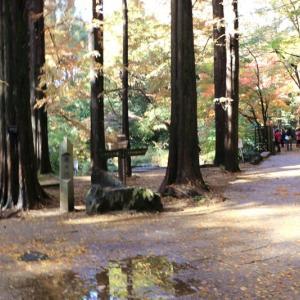 園内にまさかの森林