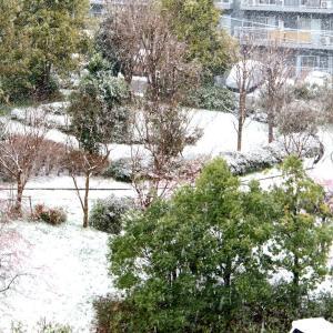 外は真っ白今季初の積雪中