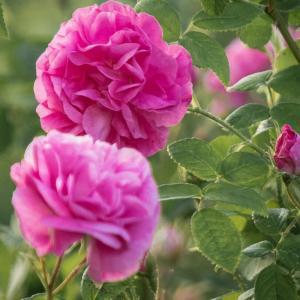 女性とお花のアロマ