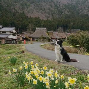 京都、美山かやぶきの里