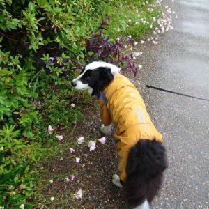雨の日散歩とお花